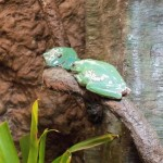 frog9
